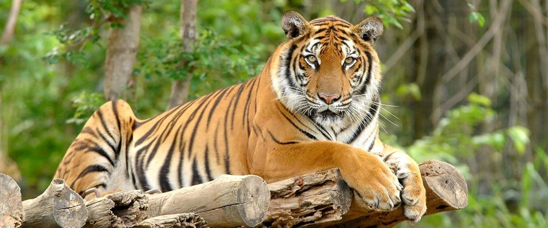 Zoo, Tiger, Ausflug